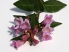 Most viewed Abelia3.jpg
