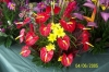 Red_Anthurium_bouquet_2_sized.jpg
