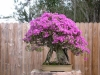 jim_smith_BOUGAINVILLEA.JPG