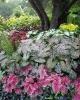 Bloom1159.jpg