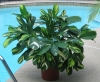 plantladylin_1191954807_305.jpg