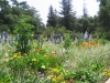 Most viewed Descanso_Garden14.jpg