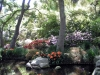 Most viewed Descanso_Garden9.jpg