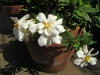 gardenia_ff_06_06_21_08.jpg
