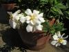 gardenia_ff_06_06_21_08.jpg