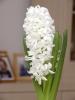 kwiat1dw1.jpg