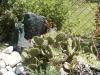 opuntia(Feigenkaktus)1.jpg