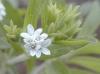 stevia1.jpg